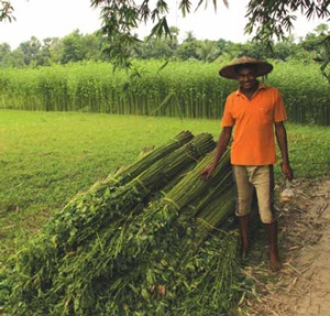 Jute Farmer with Crop